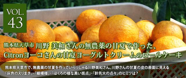 vol.43 川野美和さんの甘夏で作った、Citronヨーコさんの「甘夏ヨーグルトクリームのロールケーキ」